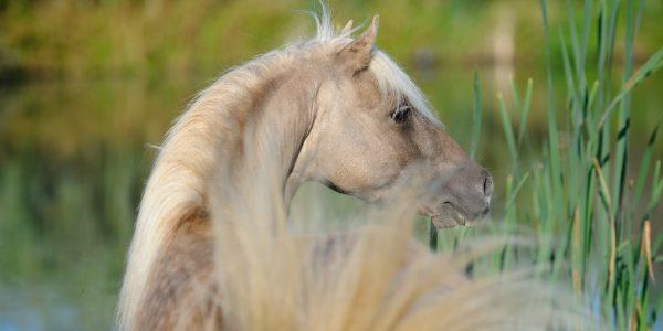 Научная работа на базе Национального конного завода «Классик пони»