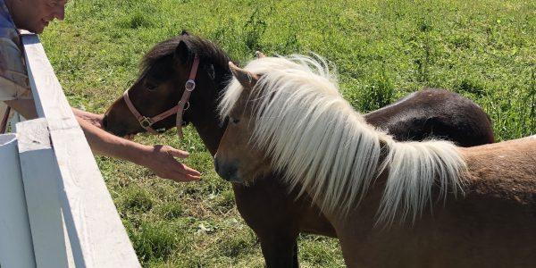 Новые приобретения Национального конного завода «Классик пони»